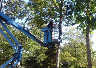 Tree Service by MJM