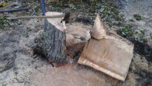 Tree Service & Stump Removal - MJM Property Maintenance