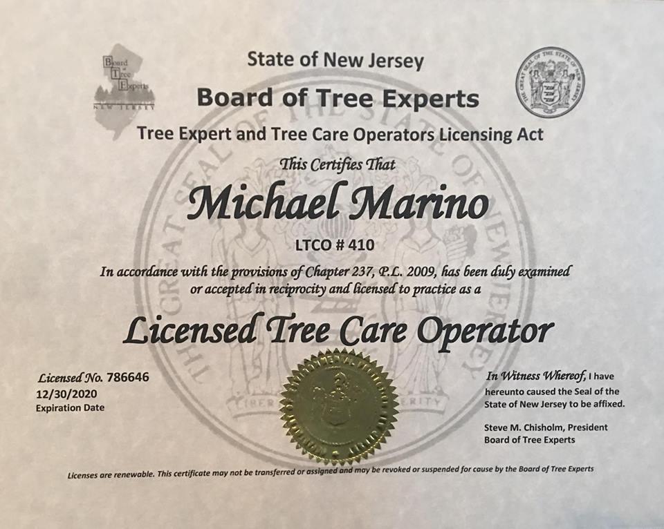 Michael Marino MJM Tree Service