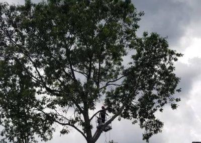 MJM Tree Service