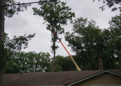 MJM Tree Service Forked River